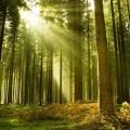 Леса – это легкие планеты