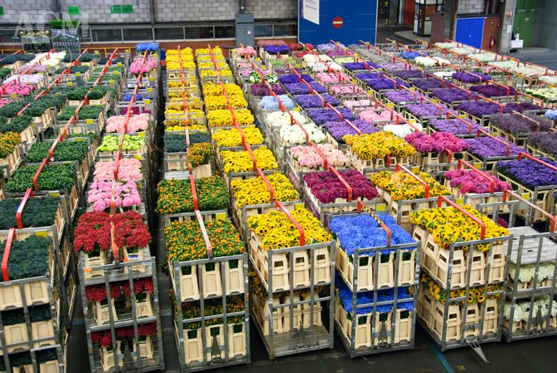 Эквадорские цветы