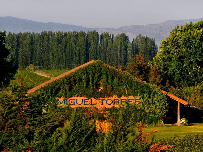 Виноградники Мигеля Торрес